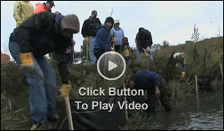 *Video:trout unlimited canada bank rehabilitation video (3:56)